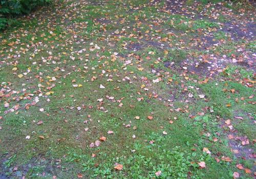 Осенний лист кружит и падает на землю
