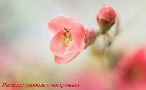 rezept_dlya_vas